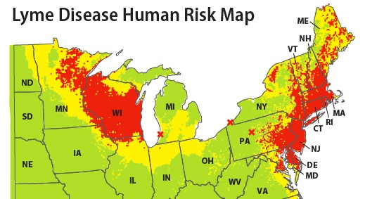 Risk map for Lyme disease cases in Eastern United States